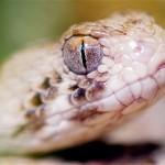 Bebe israelí mastica cabeza de serpiente