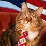 Hank, un gato que podría ser senador en Estados Unidos