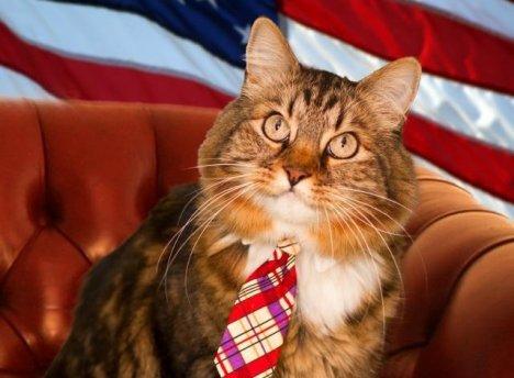 Hank, candidato al senado