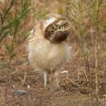El búho que modela para los fotógrafos