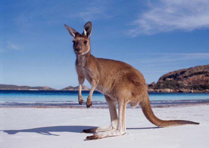 Cosas Interesantes sobre Australia