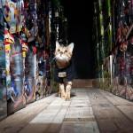 Almacén en Inglaterra toma un gato como guardia de seguridad