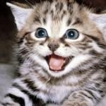 Alerta: En Perú comen gatos