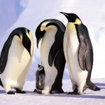Antiguedad de pinguinos y dinosaurios es similar