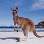 10 cosas Interesantes sobre Australia