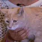 Un gato celebra 15 años como alcalde de una ciudad de Alaska